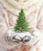 Unusual christmas concept — Stock Photo