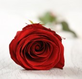 Red rose for holiday on the vintage wooden background — Stock Photo