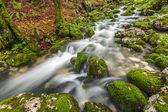 лесной ручей — Стоковое фото