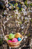 開花木のバスケットでイースターの卵 — ストック写真