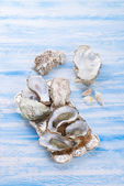 Oysters close up — Stock Photo