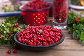 Red Lingonberries — Stock Photo