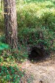 Fox hole — Stock Photo