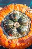Zucca turbante — Foto Stock