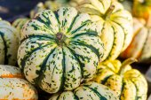 Green pumpkins — Stock Photo