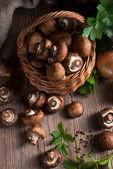 Scaly Wood Mushroom — Stock Photo