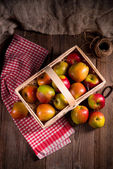 Fresh autumn apples — Stock Photo