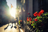 Sun, flowers and flags on the street of Old Riga — ストック写真