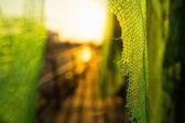 Sun rays of the setting sun through the green grid — Stock Photo