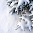 The spruce branches on a background of fresh white snow — Stock fotografie #61325767