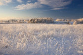 Rural winter landscape with white frost on field and forest — Stock Photo