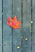 The red maple leaf on a green bench in autumn — Stock Photo