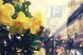Yellow flowers on a street in the city with parking sign — Foto Stock