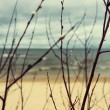 Beach and sea through the branches of willow spring — Stock Photo #67791279