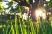 The bright sun is shining through the green grass — Stock Photo