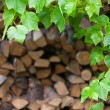 Green leaves of wild plants on the background of wood logs — Stock Photo #74527473