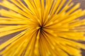 Flower of spaghetti gathered in a bunch, view from the top — Stock Photo