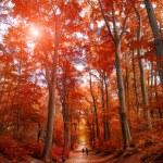Pathway through the autumn park unde sunlight — Stock Photo #55536583
