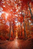 Pathway through the autumn park unde sunlight — Stock Photo