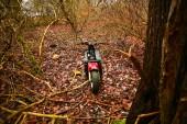 Motorbike in a forest — Zdjęcie stockowe