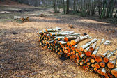 Wood stack in the forest — Stock Photo