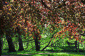 Trees with colorful foliage — Photo