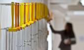Yellow hammers — Stock Photo