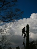 Woodcutter on top of tree in action — Stock Photo