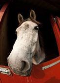 Horse show in denmark — Stock Photo