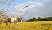 Horse in denmark and blue sky — Stockfoto
