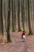 Girl with a horse in forest — Stock Photo