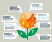 Flower infographics — Stock Vector