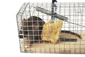 Scoop or mouse trap — Stock Photo