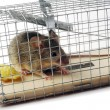 Scoop or mouse trap — Stock Photo #52207327