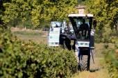 A colheita com máquinas — Fotografia Stock