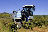 The harvest with machines — Stock Photo