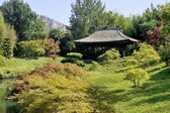 Japanese Garden Park Anduze bamboo — Stock Photo