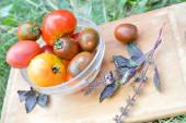 Tomatoes and branch of basil — Stock Photo