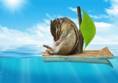 Funny animal, chipmunk floating at sea, voyage concept — Stock Photo