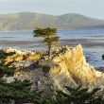 solitario ciprés en california — Foto de Stock   #52346027