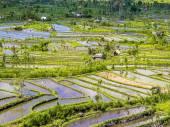 Reisterrassen auf bali — Stockfoto