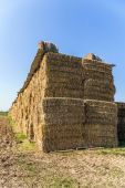 Bale of straw in automn in intensive colors — Stock Photo