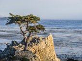 Cypress at the coastline  — Stock Photo