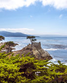 Lone Cypress tree view along famous 17 Mile Drive in Monterey — Stock Photo