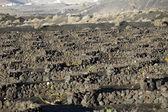 Vineyards in La Geria, Lanzarote  — ストック写真