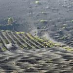 Vineyards in La Geria, Lanzarote, canary islands, Spain. — Stock Photo #59913471