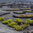 Vineyards in La Geria, Lanzarote, canary islands, Spain.  — Stock Photo #59914035