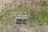 Old rotten wooden chair at a meadow — Stock Photo