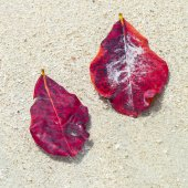 Leaves remaining on a sandy white beach — Stock Photo