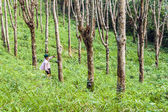 Worker at rubber tree plantation in Thailand — Foto Stock
